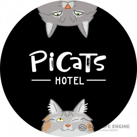 Как выбрать гостиницу для кошек