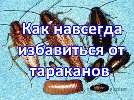 Как избавиться от тараканов в доме навсегда